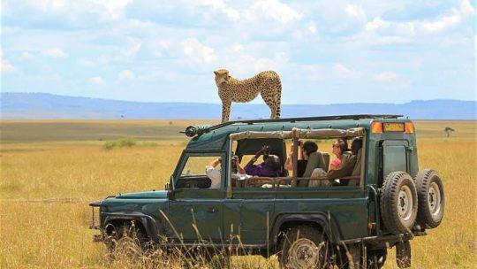 Le Kenya, la meilleure destination pour une partie de safari