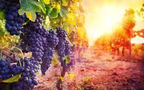Quels sont les impacts du changement climatique sur le vin  et la viticulture ?
